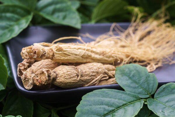 Siberian Ginseng Eleuthero Health Benefits