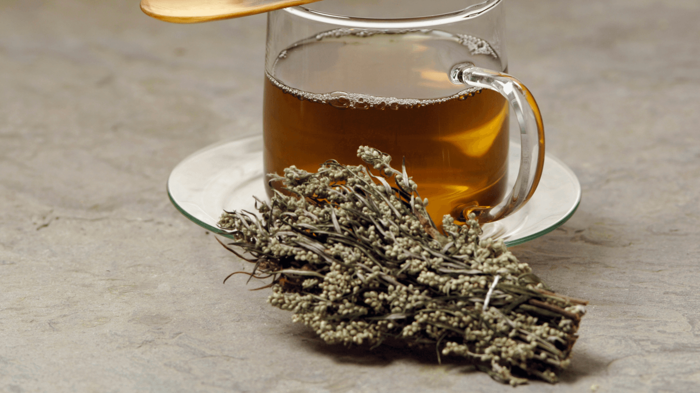 Top Mugwort Health Benefits
