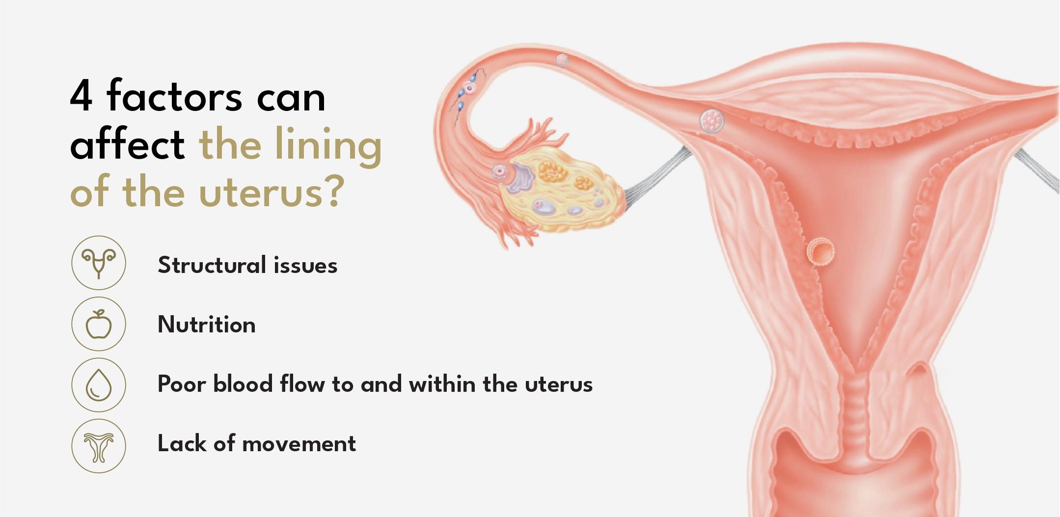 thicken uterine lining