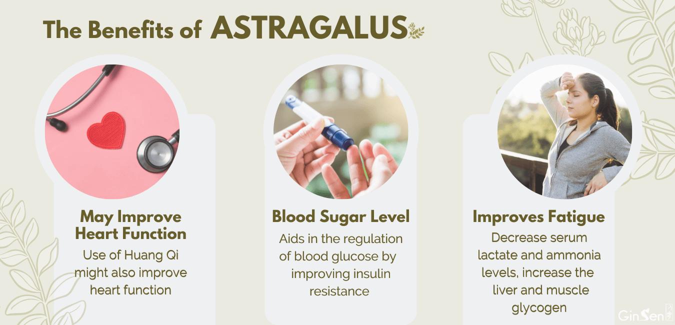 astragalus benefits