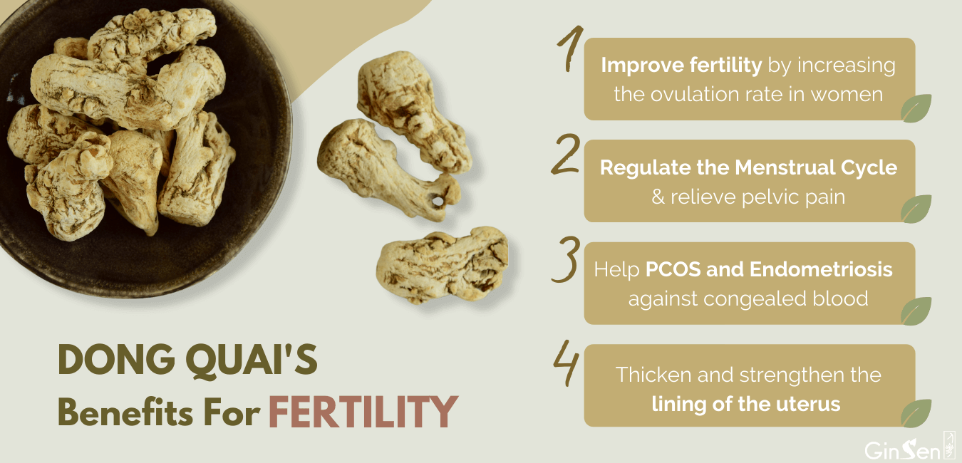 Dong Quai for Fertility